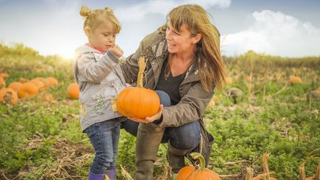 Willows Activity Farm in St Albans is holding a pumpkin festival during October half-term. Picture: