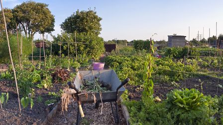 Debbie wishes local authorities would set aside more space to create new allotments Picture: Getty I
