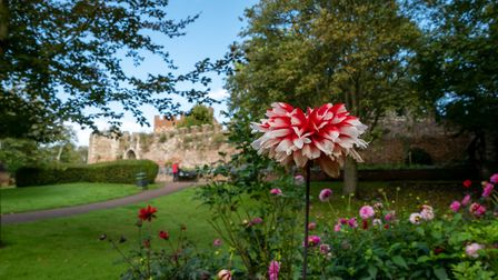 The Moat Garden, Hertford Castle, Hertford. Picture: DANNY LOO