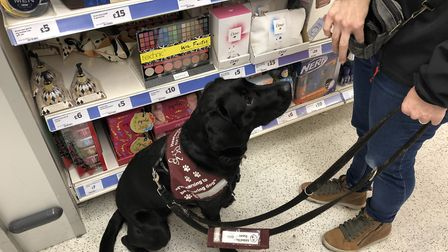 Hearing dog, Cyprus, out and about in Harpenden with volunteer Trudi Waterhouse. Picture: Laura Bill