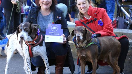 Fundraising dogs and their owners wearing purple poppies, which honour military animals who have die