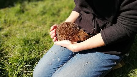 Herts and Middlesex Wildlife Trust and Hornbeam Wood Hedgehog Sanctuary have raised more than £1,300