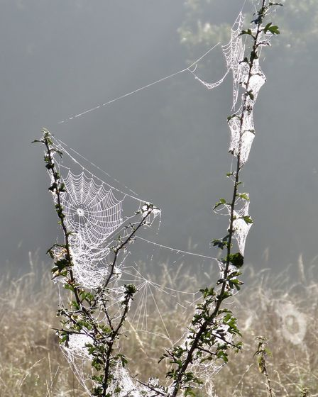 Spiders' webs at first light. Picture: Rupert Evershed