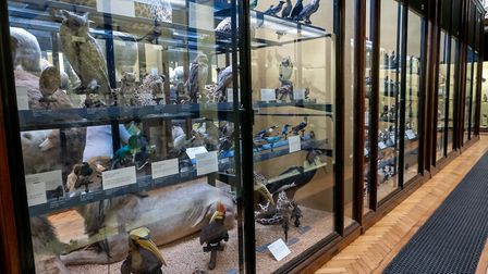 The collection inside the Natural History Museum, Tring. Picture: DANNY LOO