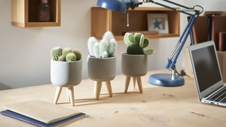 Set of Three Cacti, £33, Suttons (suttons.co.uk). Picture: Suttons/PA