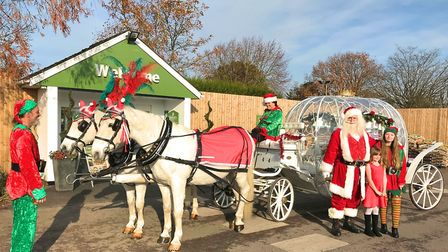 Santa arrived in a horse-drawn carriage to take up residence in his grotto at Notcutts St Albans. Pi
