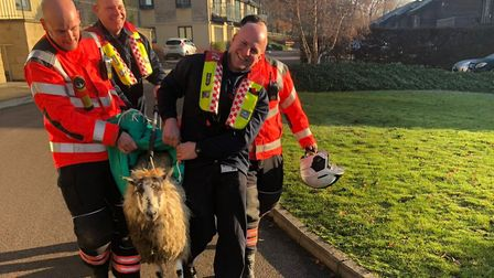 Firefighters were called to rescue a sheep in Huntingdon this morning