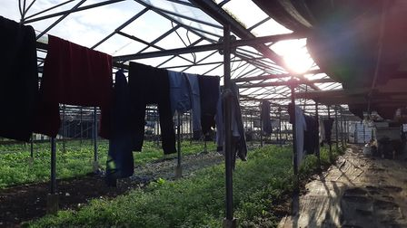 Police visited a suspected modern slavery nursery in Kneesworth on Friday, and found five Vietnamese