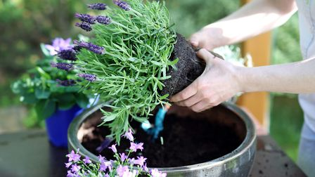 1. Use permanent plantings in containers. Picture: iStock/PA
