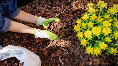 3. Stop weeds before they start. Picture: iStock/PA