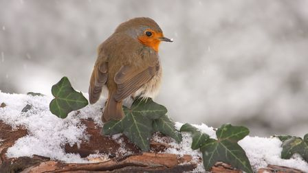 Our garden inhabitants appreciate treats at Christmas too. Picture: iStock/PA
