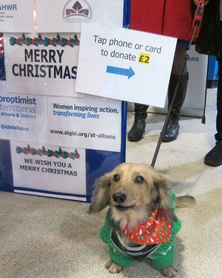 Rosie the dachshund helped raise money with the Soroptimists at St Albans City station Picture: Jane