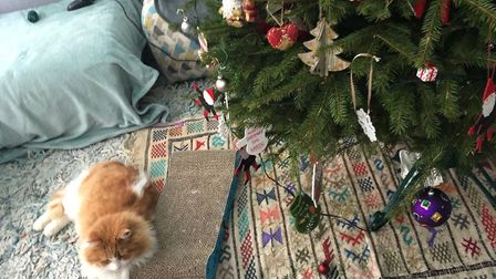 Missing St Albans ginger tom cat Thor was happily back at home with his family in time for the new y