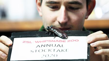 Keeper Thomas Maunders is counting fish in the aquarium as part of ZSL Whipsnade Zoo's annual stock-