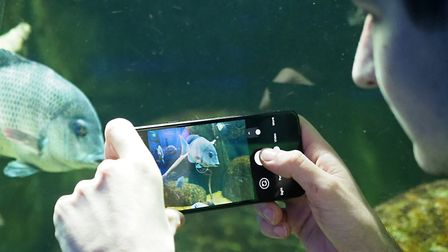 Zookeepers are counting fish in the aquarium as part of ZSL Whipsnade Zoo's annual stock-take. Pictu