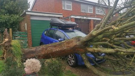 A fallen tree in Flamstead. Picture by Anna Franklin.