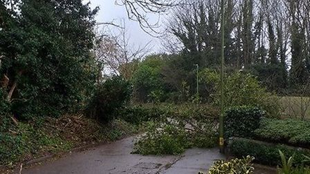 Tree damage in Wheathampstead. Picture by Jess Farley.