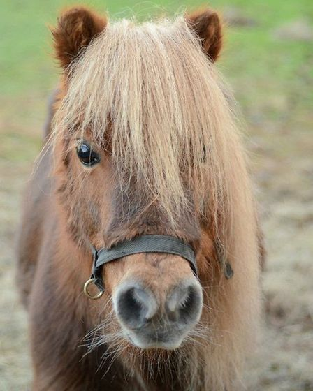 The equine-themed car boot sale will raise money for the Shetland Pony Welfare Trust. Picture: Court