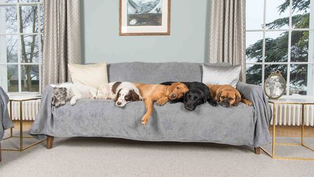 Mink towelling sofa throw for dogs from Ruff And Tumble, www.ruffandtumbledogcoats.com, 110.