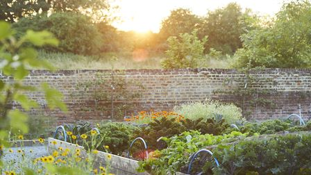 The Pig Hotel, The Pig, The pig at Bridge, Kent, hotel, gardens, kitchen gardens, food, dining, room