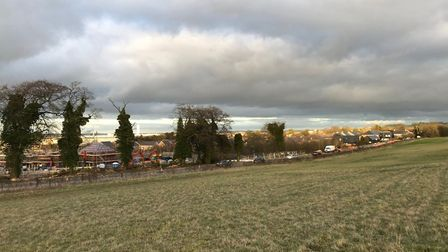 Trees removed near the Hedera Gardens development in Royston. Picture: Liz Meissner