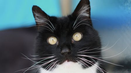 Wood Green, The Animals Charity's Heydon centre - which rehomes cats - is set to close. Picture: Woo