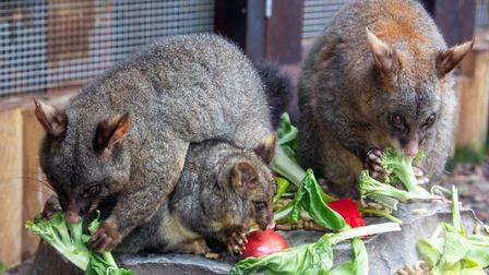Hammerton Zoo has launched an appeal so it can continue to feed its animals