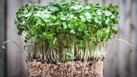An easy win: you will see your efforts pay off quickly with cress. Picture: iStock/PA