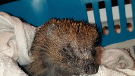 Elsa Nightingale was named by The London Colney Rescue after coming from nearby London's makeshift N