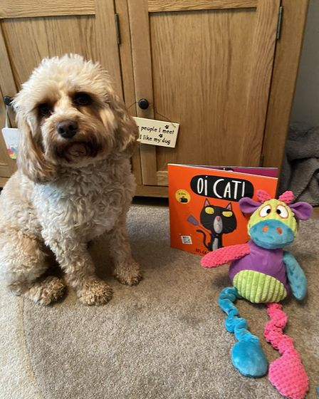 Teddy the covapoo from London Colney has been reading bed time stories. Picture: Gemma Broom