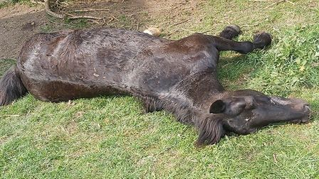 Twilly the horse found dead