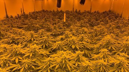 South Cambs police officers uncovered the cannabis factory yesterday afternoon. Picture: Cambs polic