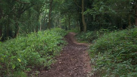 The Wick woodland. Picture: Supplied