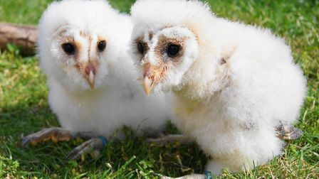 The Raptor Foundation at Woodhurst needs help to feed its birds