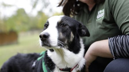 Scores of animals from Wood Green are being fostered after the charity was forced to suspend rehomin