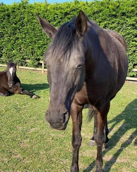 St Albans horse owner asks people not to feed her horses because it is putting their lives at risk.
