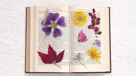 Pressed flowers can make lovely decorations and are easy to create. Picture: Getty Images/iStockphot