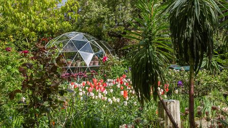 The Chase garden, one of the National Garden Scheme's 'virtual' gardens. Picture: Matthew Bruce/NGS/