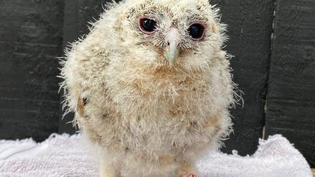 Herring Green animal farm and bird of prey centre is raising funds.