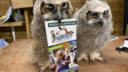 The birds of prey centre at Herring Green needs funds to feed the birds