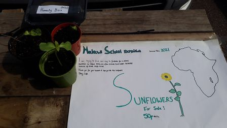Selling sunflowers has been one of the ways KJAR students have fundraised for their Malawi trip. Pic