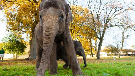 ZSL Whipsnade Zoo is facing a funding crisis due to the coronavirus pandemic.