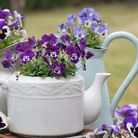 Old teapots and jugs can double as plant containers. Picture: iStock/PA