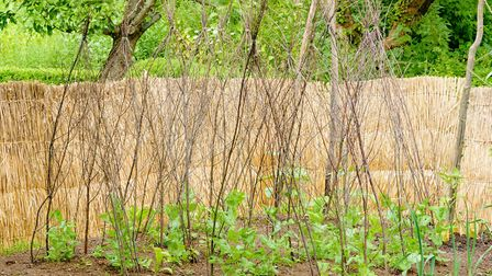 Twigs can come in handy as plant supports. Picture: iStock/PA