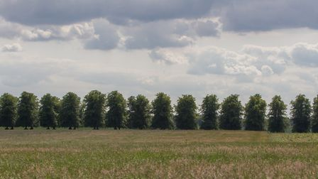 Field and trees on the Luton Hoo Estate.