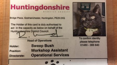 Sweep the cat had his own HDC id card