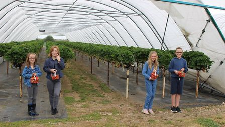 Melbourn's Bury Lane Farm Shop has held its first pick your own session of the year now lockdown re