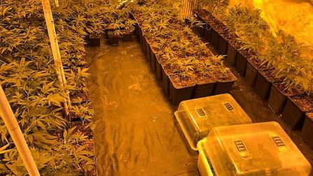 Nearly 250 cannabis plants worth £209,000 discovered at home in Huntingdonshire village. Picture: CA