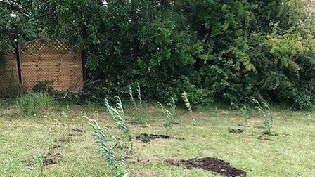 Children grew a willow tunnel for their school during lockdown for The Lea Primary & Nursery School