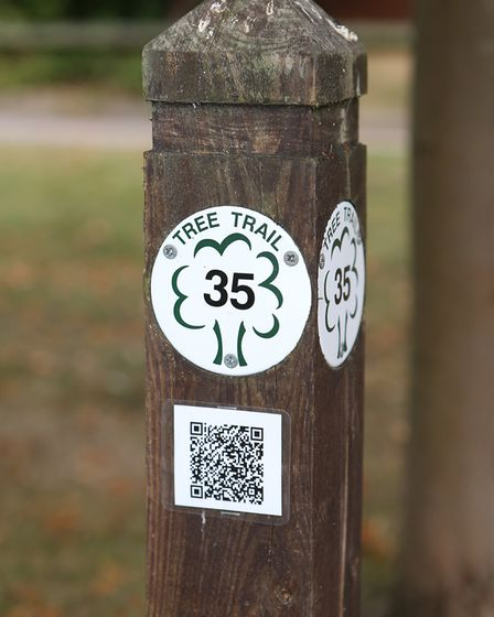 One of the information points on the Highfield Park Tree Trail. Picture: Danny Loo